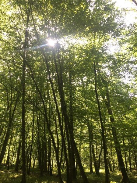 bain de forêt Vienne